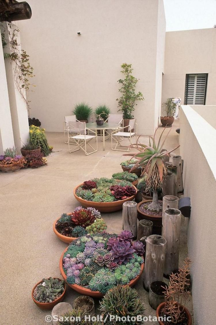 Admirable Indoor Succulent Garden Ideas