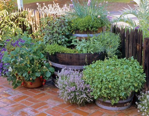 Popular Potted Herb Garden Ideas